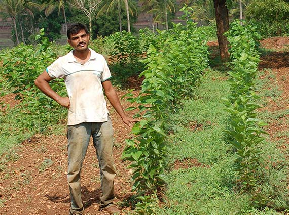 Farmer standing next to the short mulberry plants grown using hard borewell to test against crops produced using Crystal Blue structured water devices