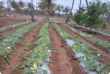Structured water unit for agriculture fields