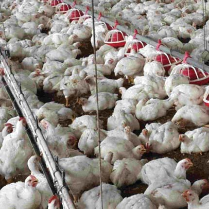 structured water units for poultry