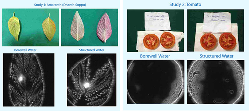 Structured water vs normal water - vegetable cultivation with water structuring units