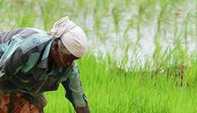 Woman working in the agricultural field - structured water for agriculture field - automatic water softener